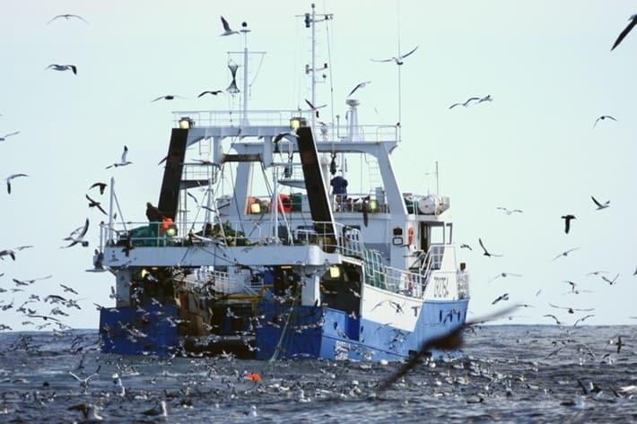 albatroz barcos de pesca