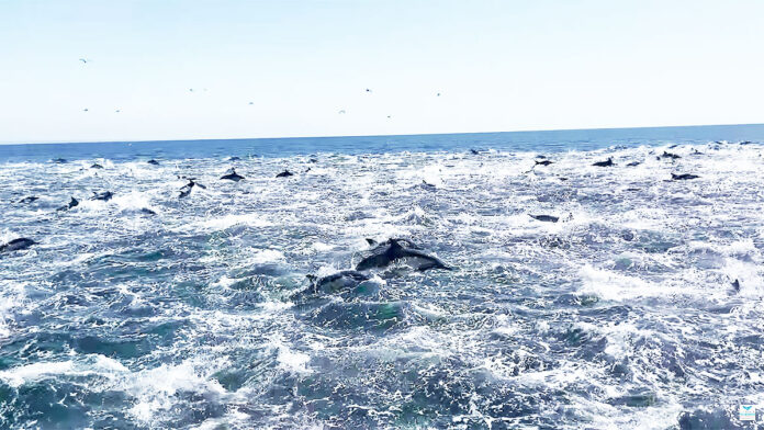 golfinhos califórnia