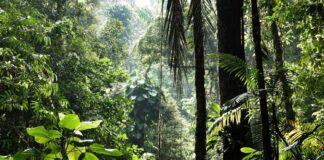 florestas tropicais espécies desconhecidas
