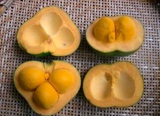 frutas caatinga cerrado