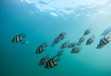 espécies marinhas mudanças climáticas