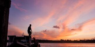 manguezais Amazônia