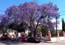 plantar árvores frente de casa