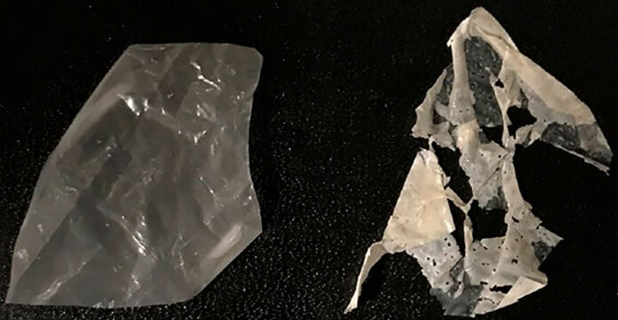 plástico biodegradável Berkeley