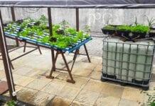 sistema doméstico de aquaponia