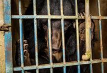 comércio de animais silvestres