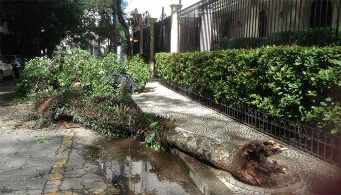 queda de árvores São Paulo