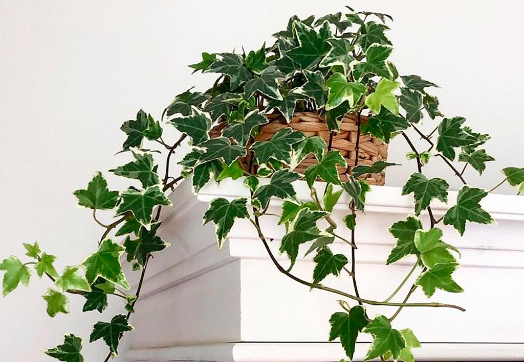 plantas bem-estar