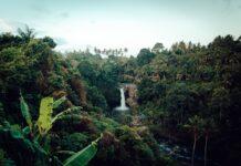 restaurar ecossistemas