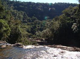 Parque Estadual do Jurupará restauração
