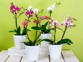 orquídea apartamento