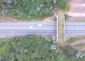 Rodovia em São Paulo ganha ponte verde para travessia de animais silvestres