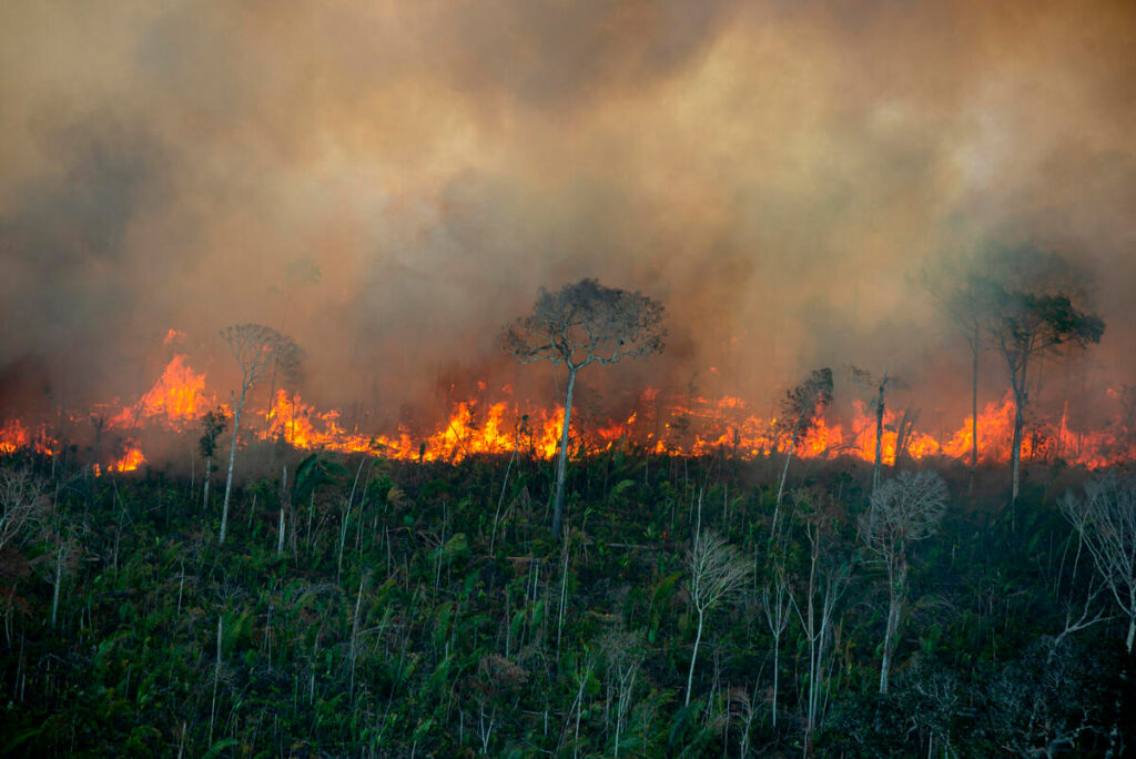 queimadas fogo amazônia