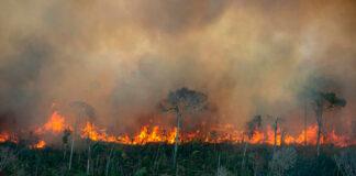 fogo Amazônia