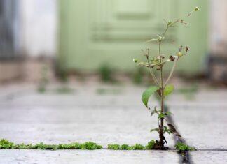 3 plantas comestíveis que toda calçada tem