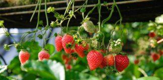 frutas primavera