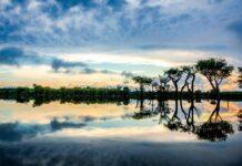 dia amazônia