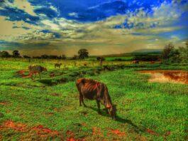 Pastagem no Brasil