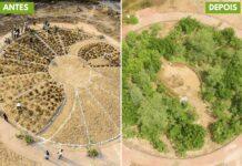Indiano planta diversas mini florestas ao redor do mundo (5)