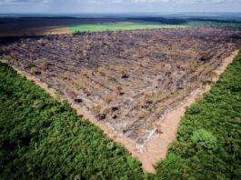 Desmatamento zero é melhor chance do Brasil avançar em ação climática