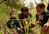 indiano refloresta bosque