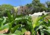 Jardim Aquícola