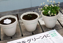 jornal japonês flores