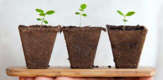 negócios regenerativos