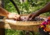 quilombolas sementes vale do ribeira