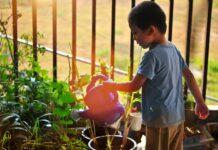 alimentos para cultivar com crianças